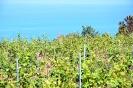 Enotour stampa Sicilia Terra Mediterranea_16
